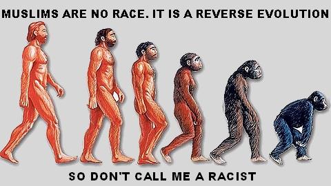 reverse_evolution