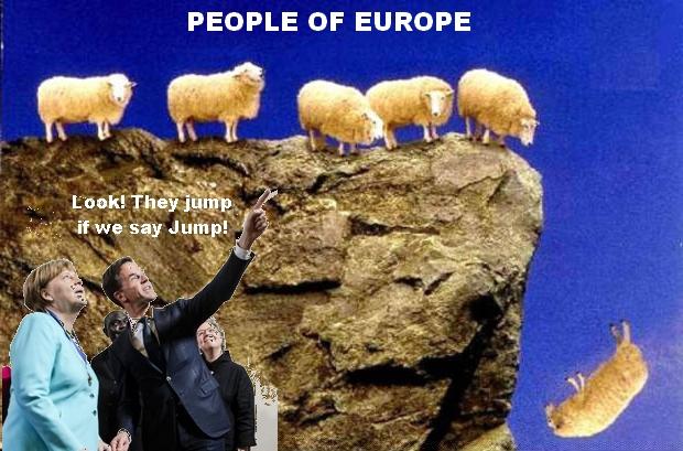 schapen.springen